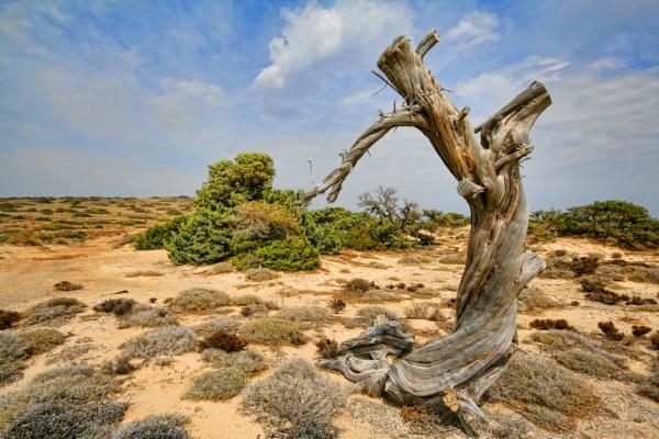 Dancing Tree by oddlegs