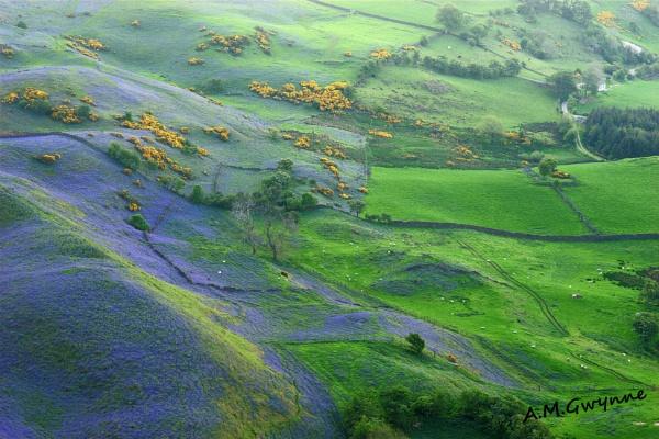 Sallagh Bluebells 2 by ANIMAGEOFIRELAND