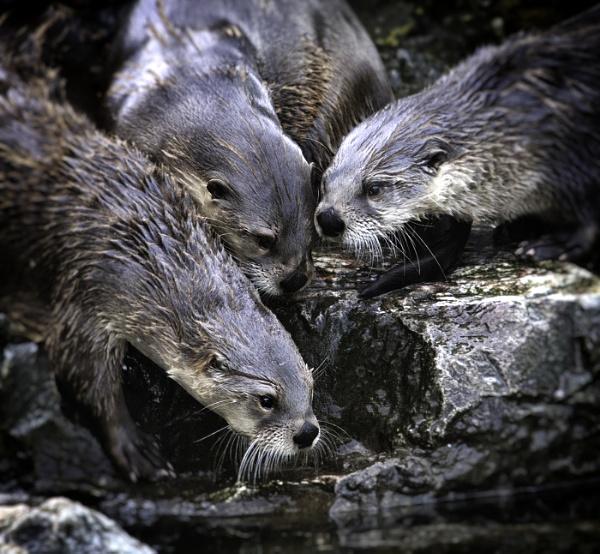 The Otter Family by jason_e