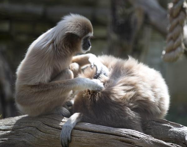 Monkey Business by Kwosimodo