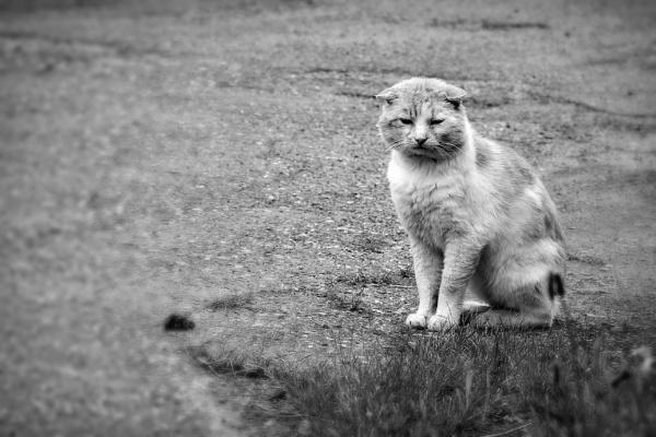 bad day by fasfoto