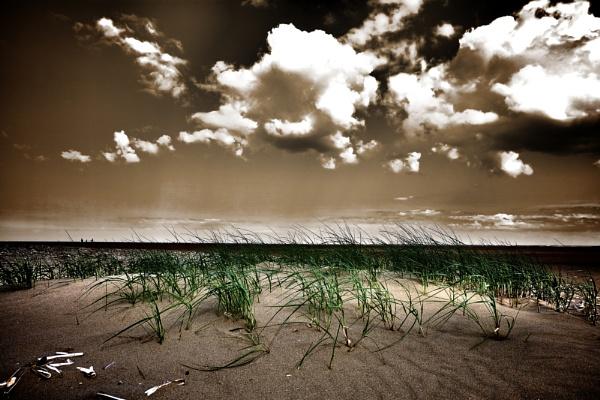 Dune by neilfuller
