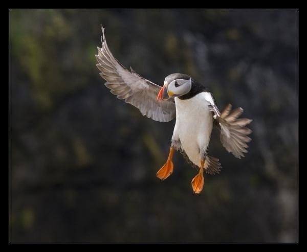 Landing gear down. by mjparmy
