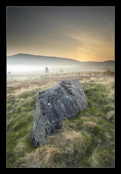 Lichen Stories by almiles