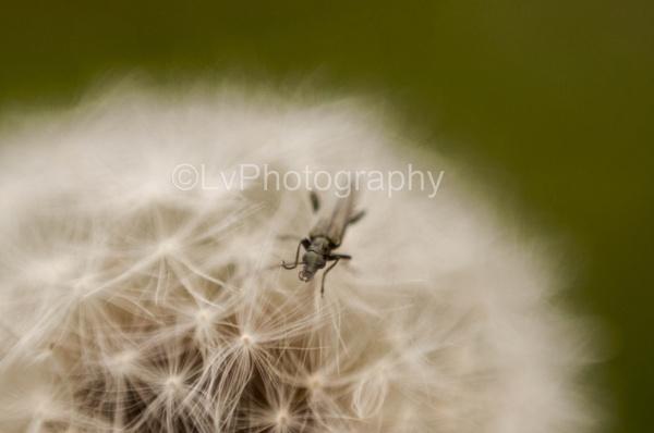 close up by lvphotogallery