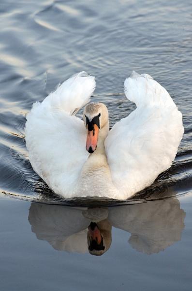 Swan Cob - Woolston Weir, River Mersey by chrismonks