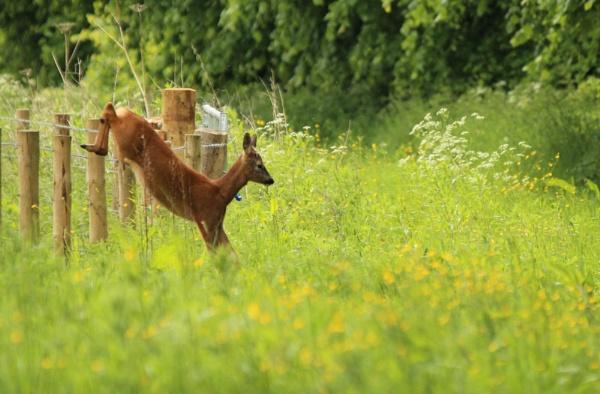 Deer fence by ScottishHaggis