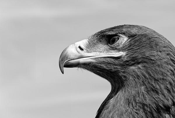 Big Bad Beak