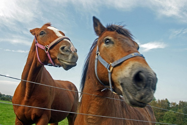 horses by shoestring