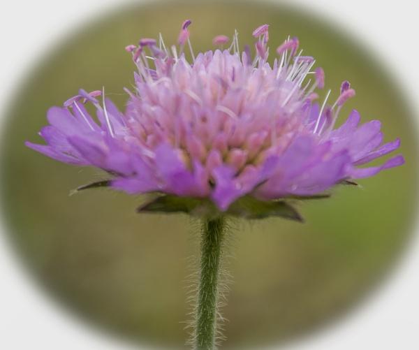 Petite Fleur by kuipje