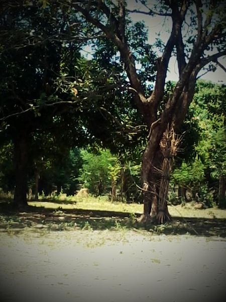 tree by aerjeff