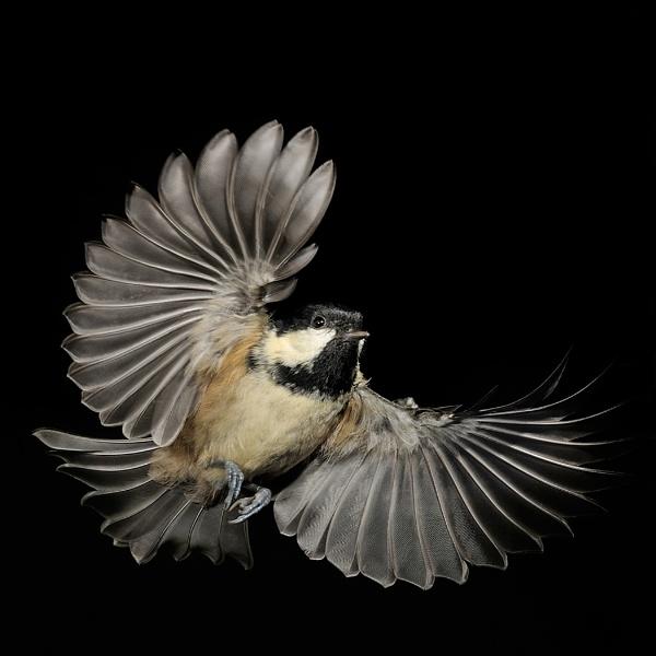 Feather Display by GarethRobinson