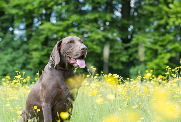 Its a Dogs Life by chrisheathcote