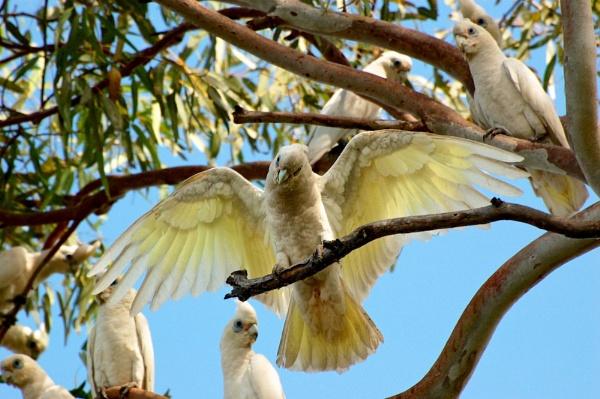 AUSTRALIA 2013 #88 by JN_CHATELAIN_PHOTOGRAPHY