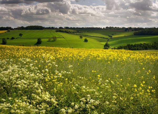 Over Golden Fields by SandraKay