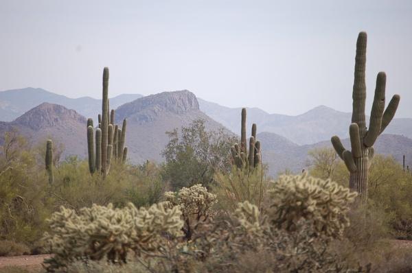Desert Landscape by Hmccdc
