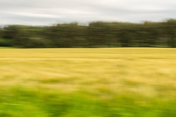 Barley field by billmyl