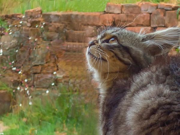 The Curious Cat by abinayabala