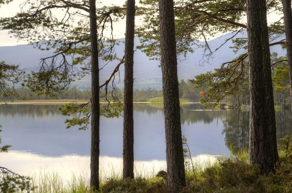 Loch Garten, Highlands by liarsdance