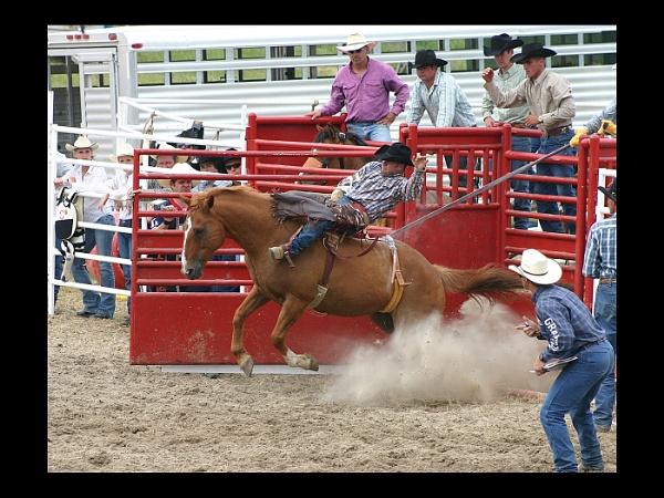 Ride him cowboy by sarumboy