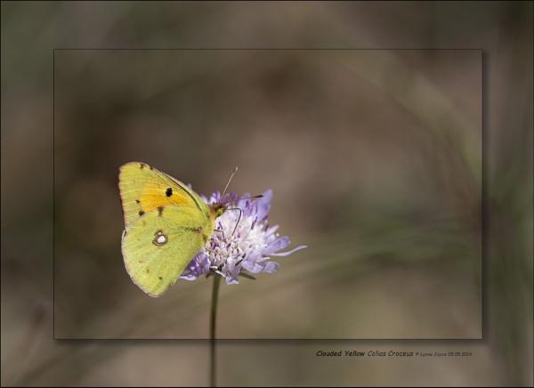 Butterflies, Bees & Bugs by LynneJoyce
