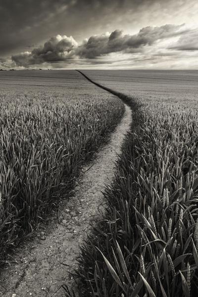 Wheat Field, Kent