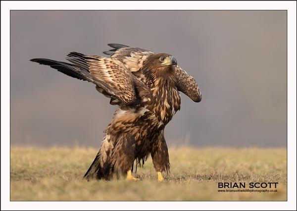 Flaps Down by Brian_Scott
