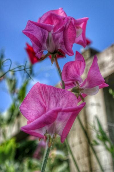 flower Power by nikonuseruk