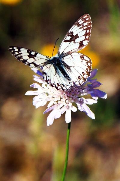 Butterfly by grlloyd