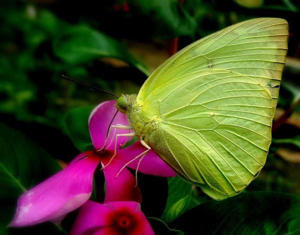 Butterfly, Returns :) by IshanPathak