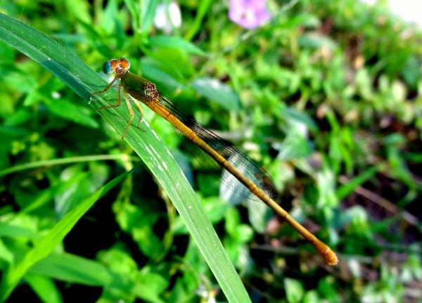 Stick Insect by IshanPathak