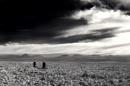 Atacama's salt flat