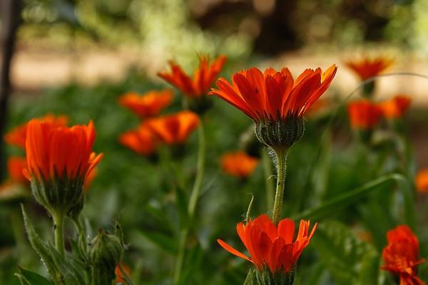 orange by hosak