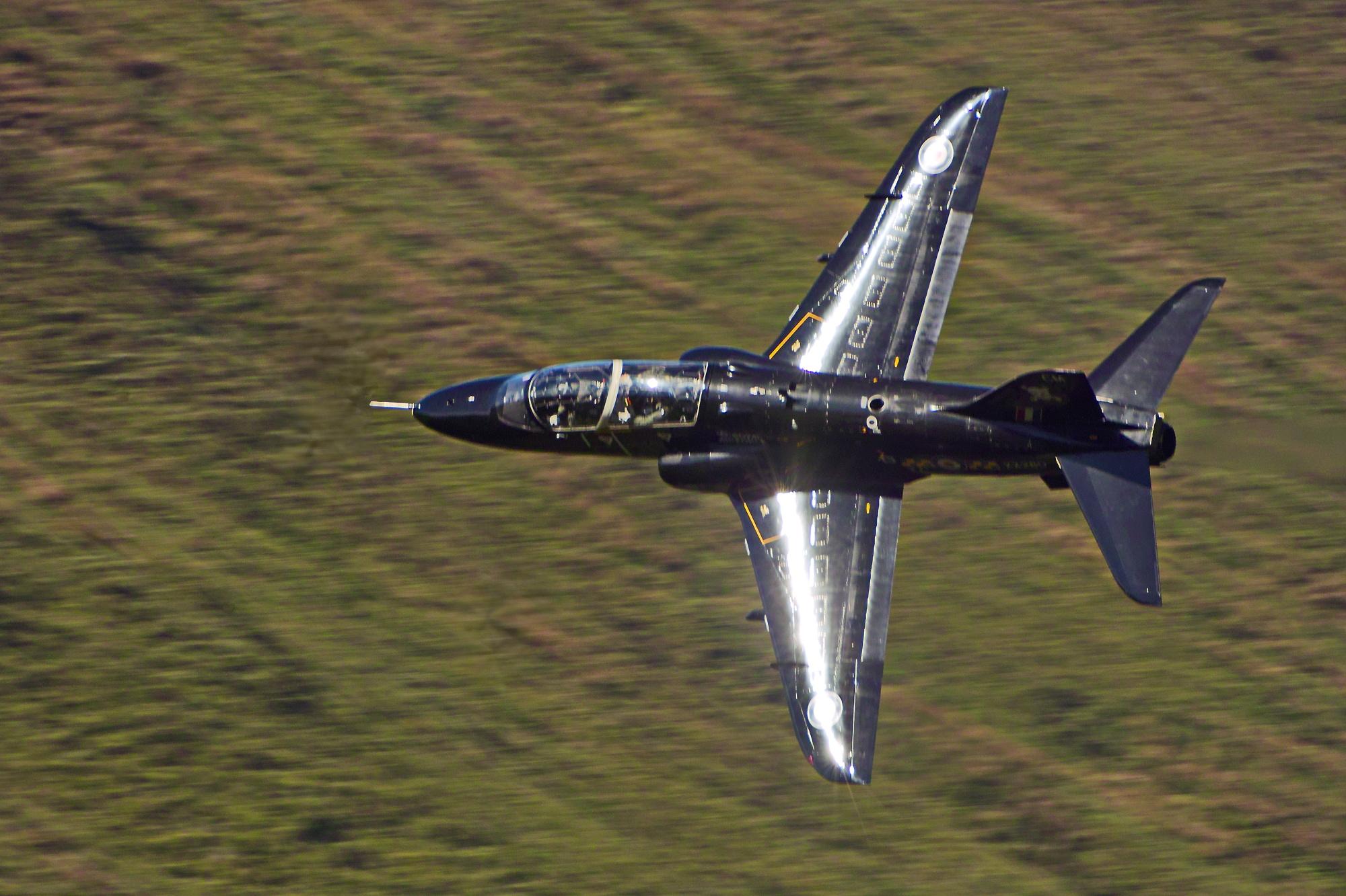 Hawk low flying