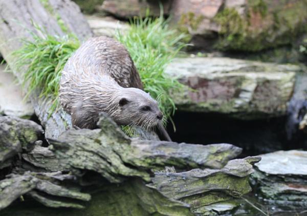 Otter by Bigdenbo