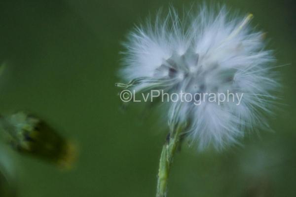 close up plant by lvphotogallery