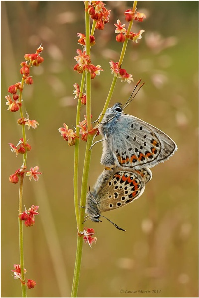 Pair Silver Studded Blues by Louise_Morris
