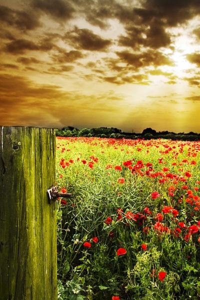 Poppy Field by Blakey_Boy