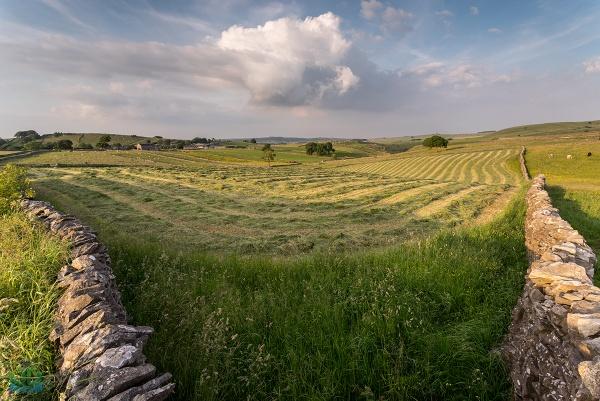 Litton Field by jamesgrant