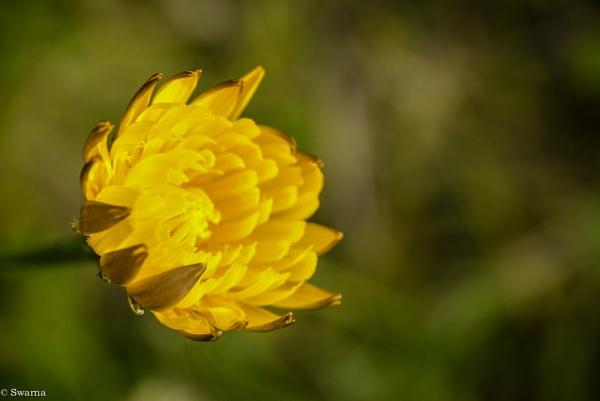 Macro Shot - Floral VI by Swarnadip