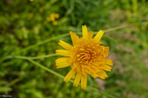 Macro Shot - Floral VII by Swarnadip