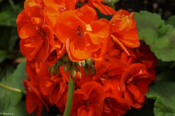 Macro Shot - Floral IX by Swarnadip