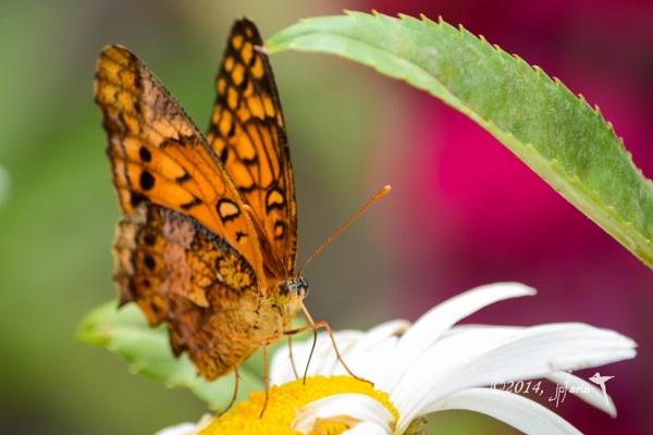 Butterfly by Zerstorer