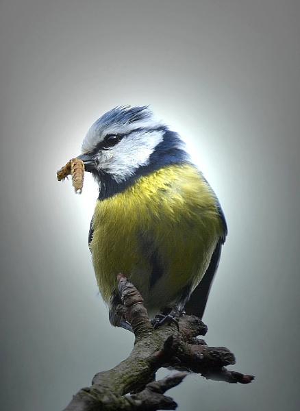 Bird by YNOR