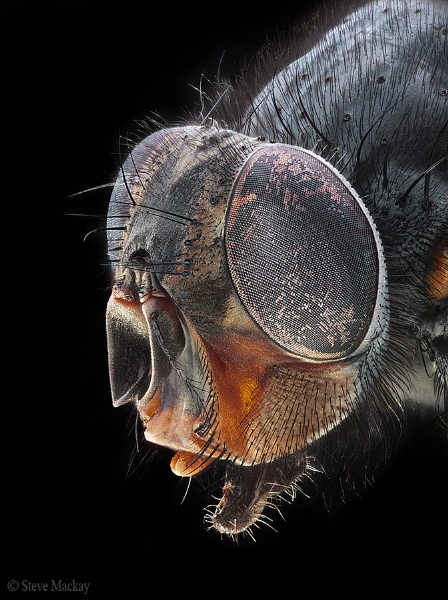 The Fly by SteveMackay