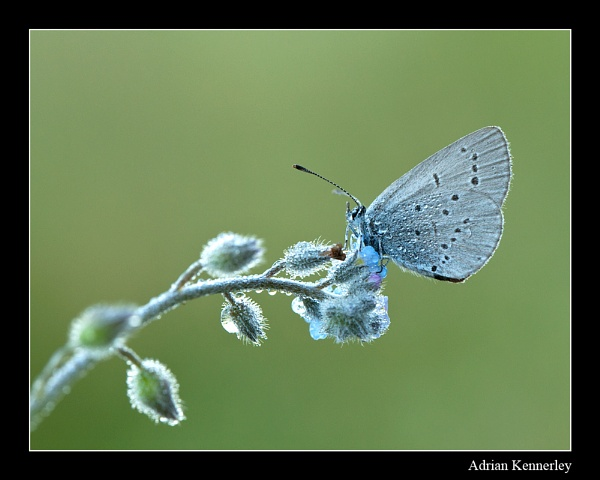 Small Blue by tomcat