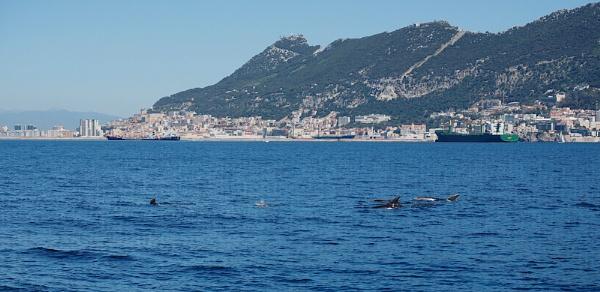 Gibraltar Dolphins by NeilSchofield