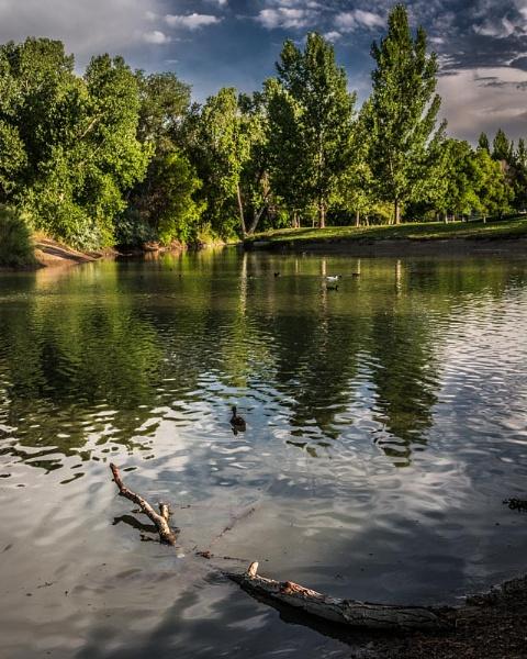 pond by ssnidey