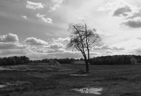 Tree In Field by photowanderer