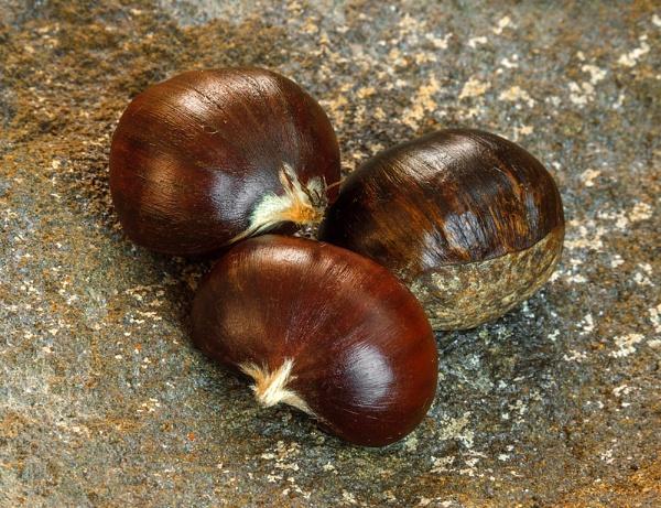 Chestnut by Golgoon